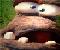 Butch Mushroom